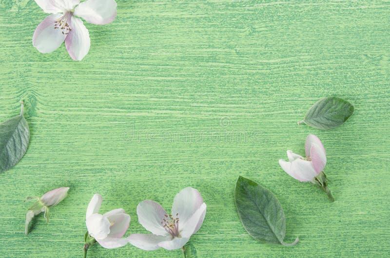 Ram med rosa blommor, sidor och kronblad, på träbakgrund för grön vår Lekmanna- l?genhet, b?sta sikt fotografering för bildbyråer