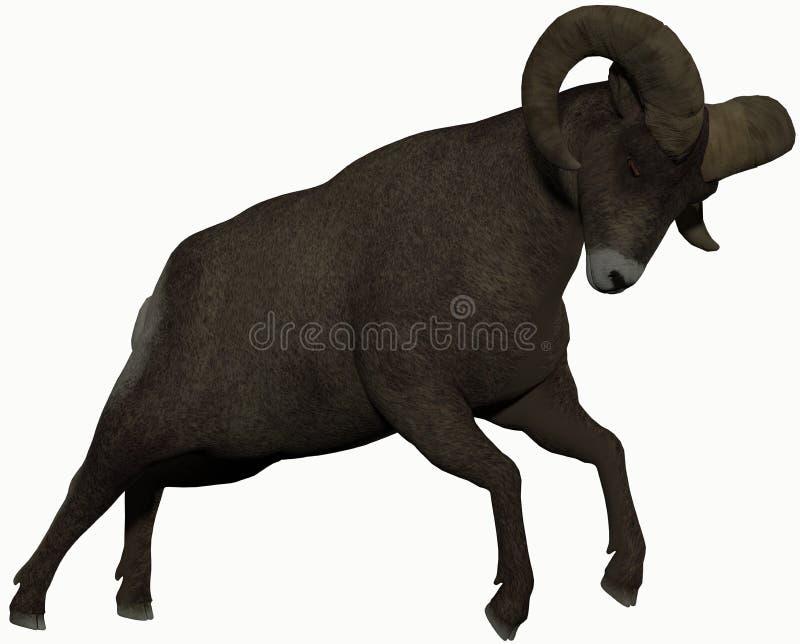 Ram met grote hoornen stock afbeelding