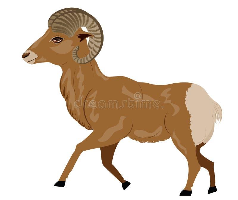 Ram selvaggia illustrazione di stock