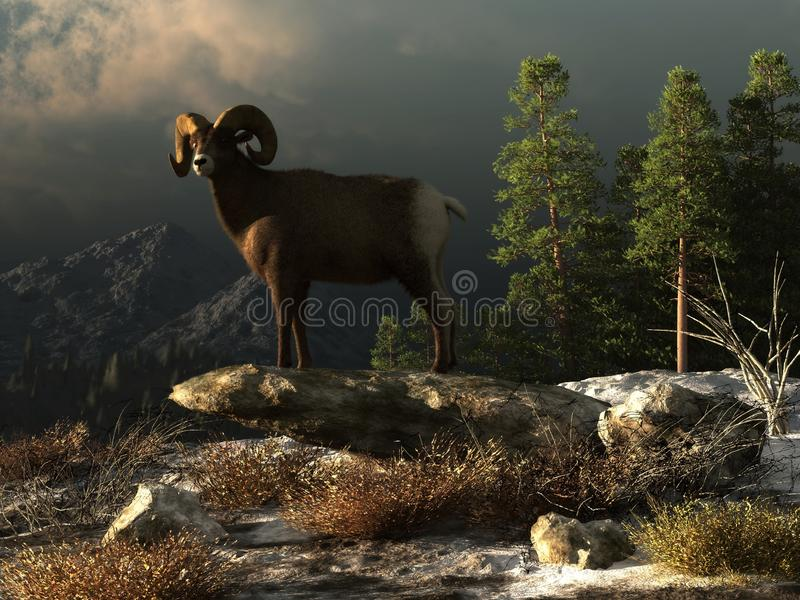 Ram selvaggio nelle Montagne Rocciose illustrazione vettoriale