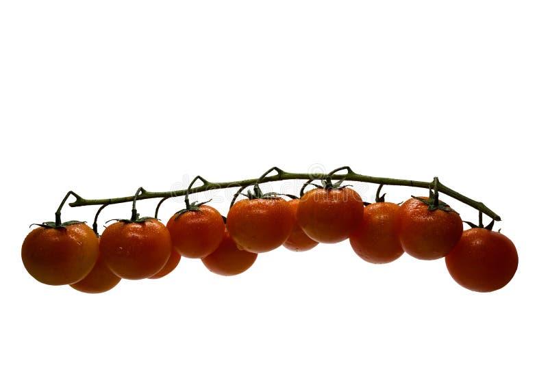Rama aislada de los tomates de cereza en el fondo blanco con el espacio para el texto fotos de archivo libres de regalías