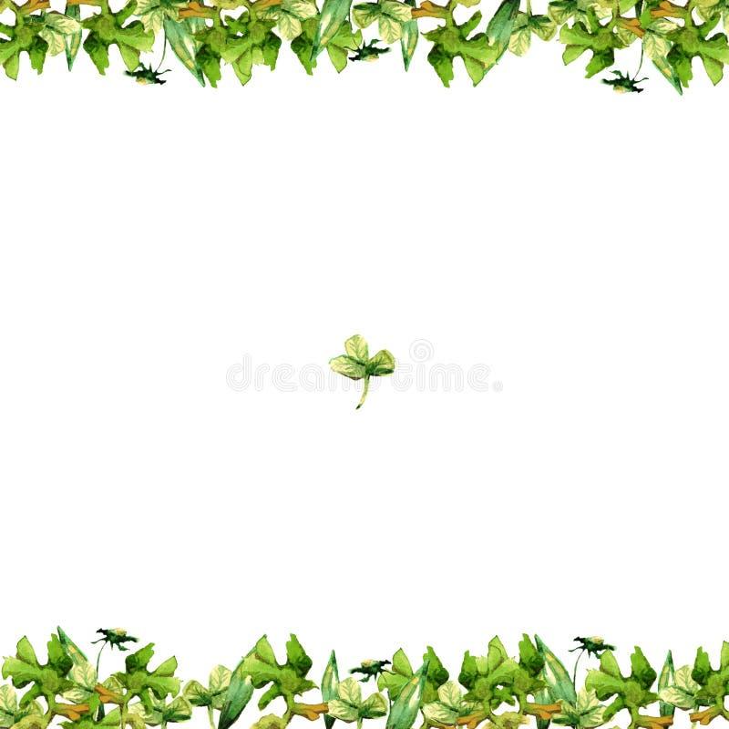 Rama akwareli zielona trawa i kwiaty płatki i ostrza koniczyna odizolowywający na białym tło rysunku royalty ilustracja