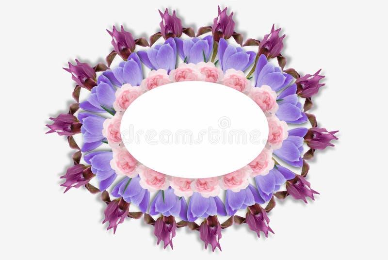 Rama barwiący kwiaty, zieleń liście, gałąź na białym tle Mieszkanie nieatutowy, odgórny widok motyla opadowy kwiecisty kwiatów se zdjęcia royalty free