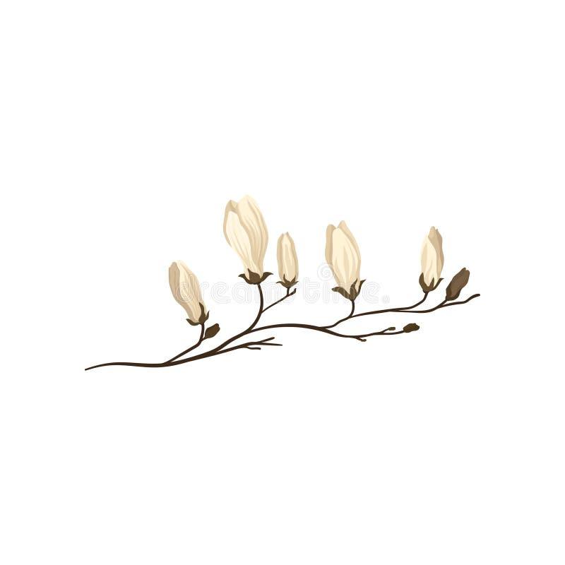 Rama blanca de florecimiento de la magnolia Ramita con las pequeñas flores Estación de resorte Tema de la naturaleza Icono plano  stock de ilustración