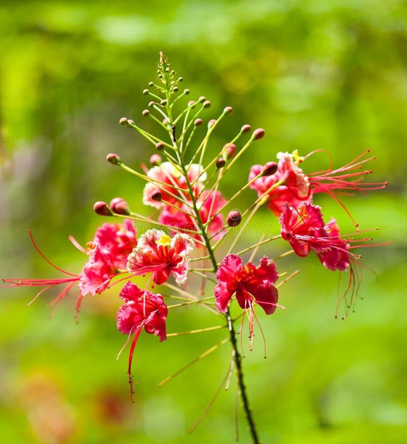 Rama con las flores del hibisco en un fondo de verde claro fotos de archivo