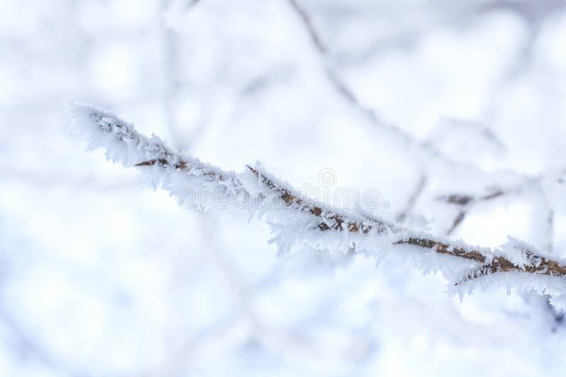 Rama congelada cubierta con helada foto de archivo libre de regalías