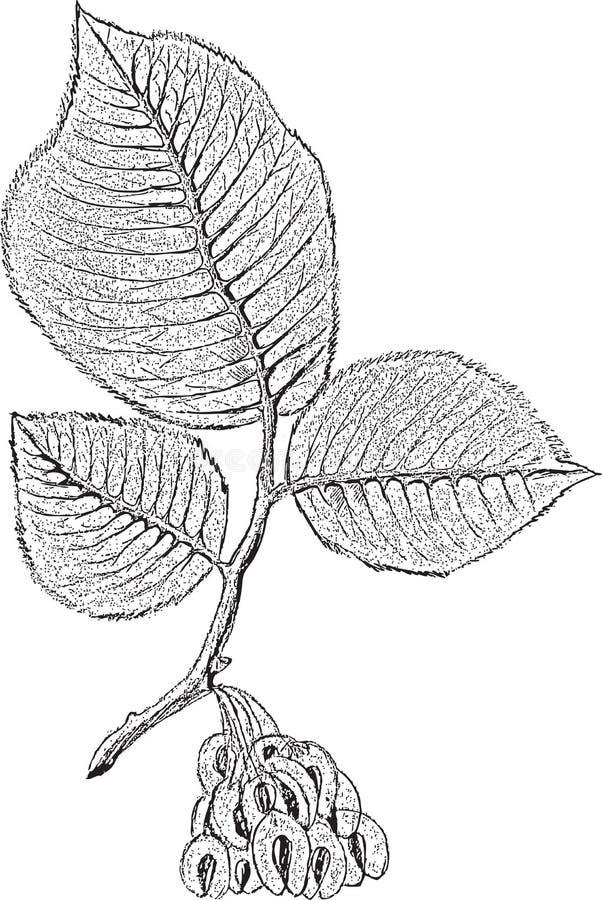 Rama de árbol stock de ilustración