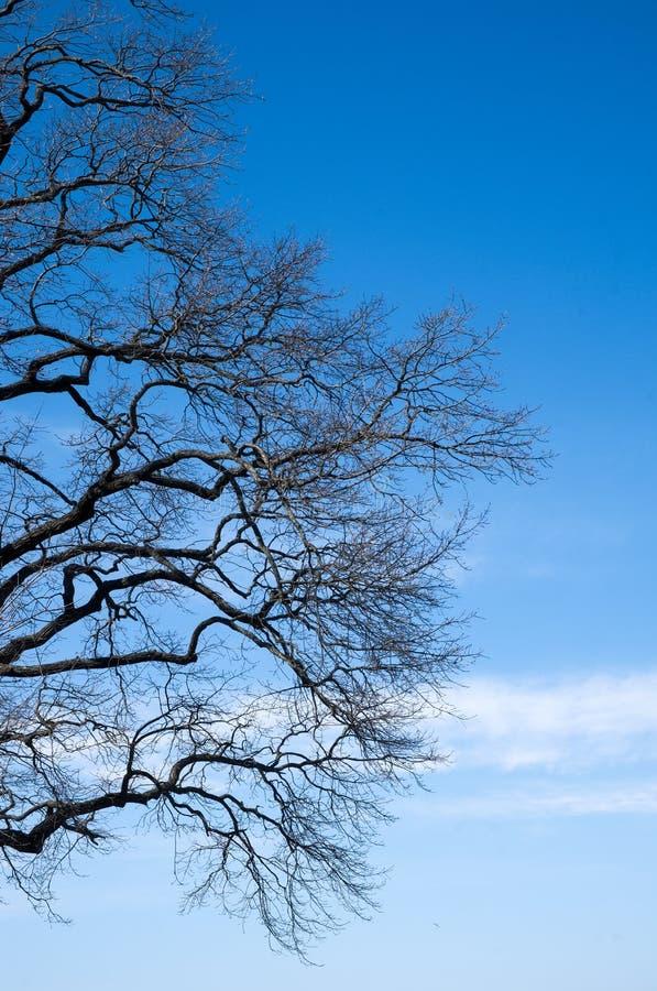 Rama de árbol imágenes de archivo libres de regalías