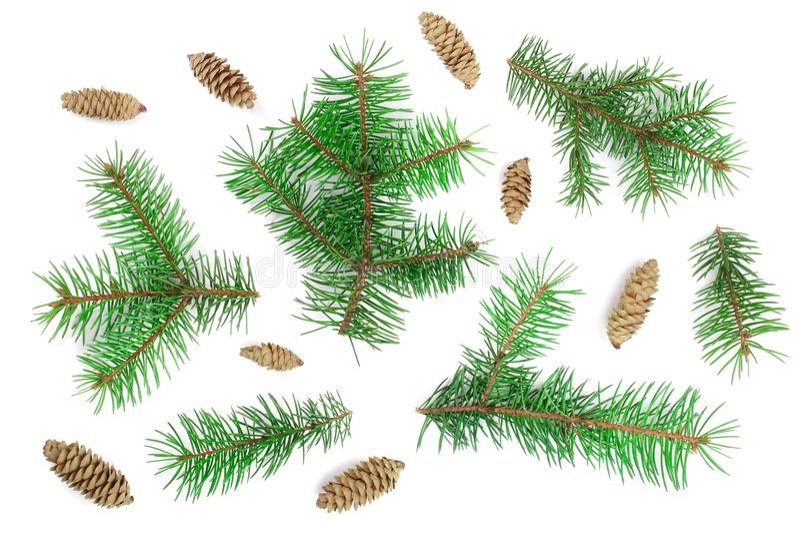 Rama de árbol de abeto con los conos aislados en el fondo blanco La Navidad Visión superior imagenes de archivo