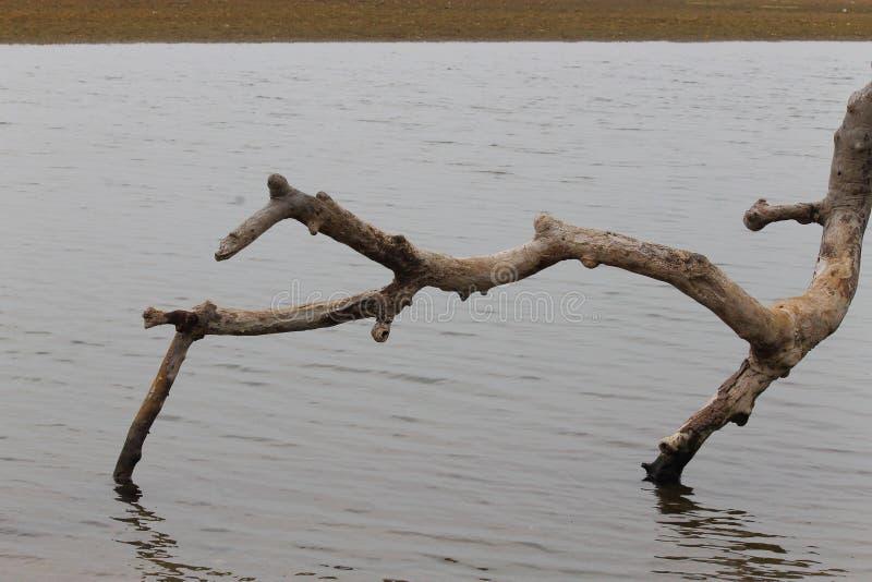 Rama de árbol caida fotografía de archivo
