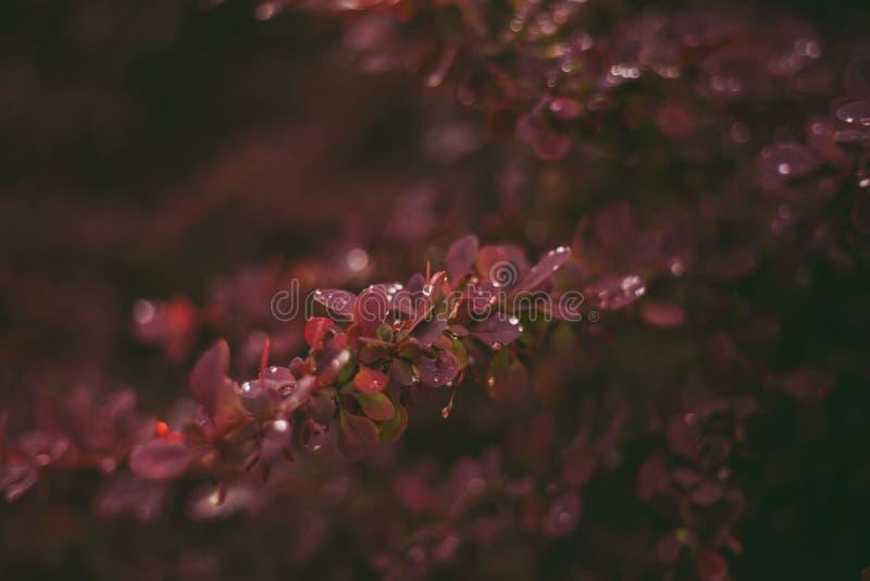 Rama de árbol con gotas de lluvia en ella fotos de archivo