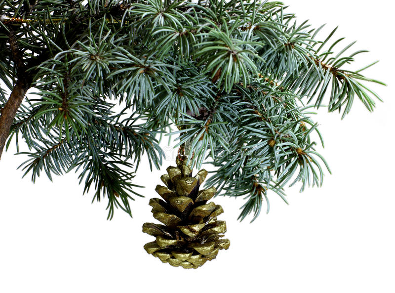 Rama de árbol de abeto aislada en blanco con el cono del pino del abeto fotos de archivo libres de regalías