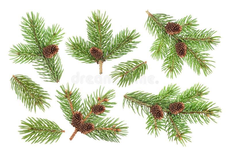 Rama de árbol de abeto con los conos aislados en el fondo blanco imágenes de archivo libres de regalías
