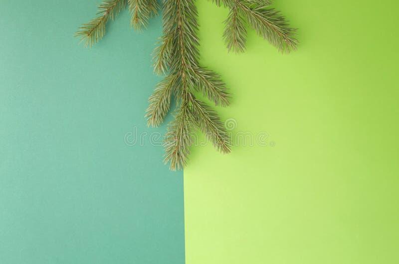 Rama de árbol de abeto en fondo del verdor Visión superior, endecha plana Copie el espacio para el texto Composición de Navidad libre illustration