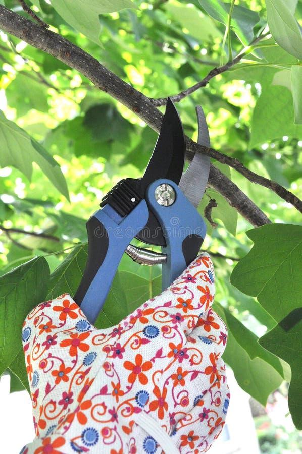 Rama de árbol de la poda de la mano fotografía de archivo libre de regalías