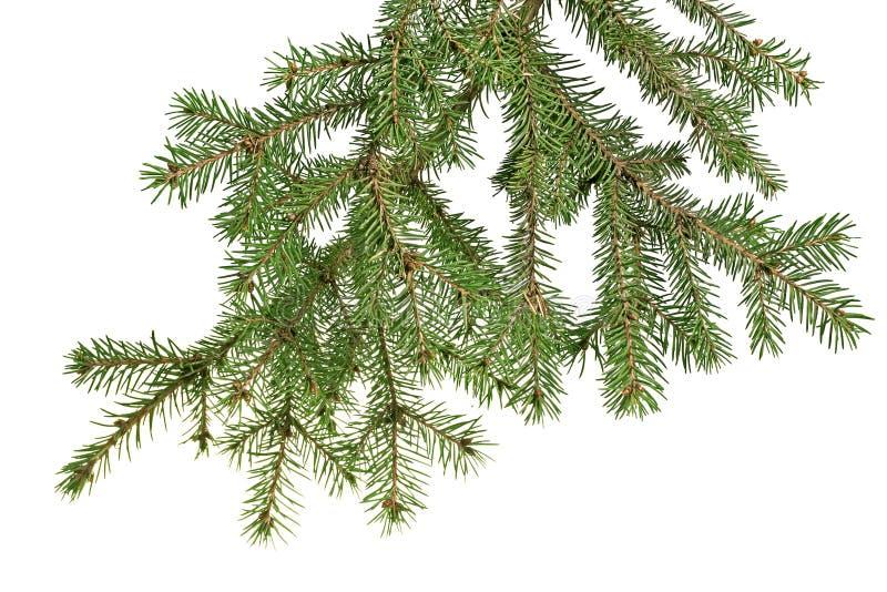 Rama de árbol de navidad imágenes de archivo libres de regalías