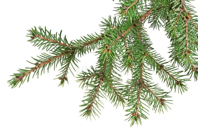 Rama de árbol de navidad fotos de archivo