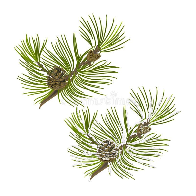 Rama de árbol de pino con los conos del pino con vector de la nieve stock de ilustración