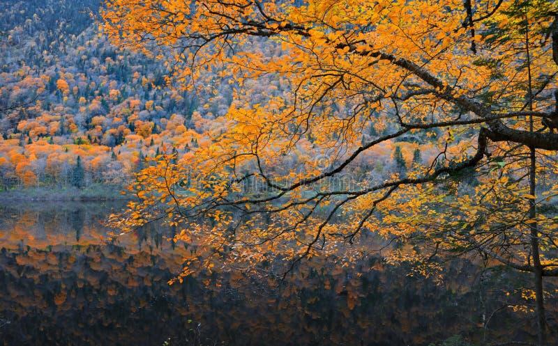 Rama de árbol del otoño sobre el río imágenes de archivo libres de regalías