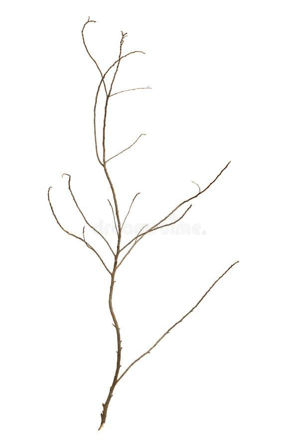 Rama de árbol deshojada fotografía de archivo libre de regalías