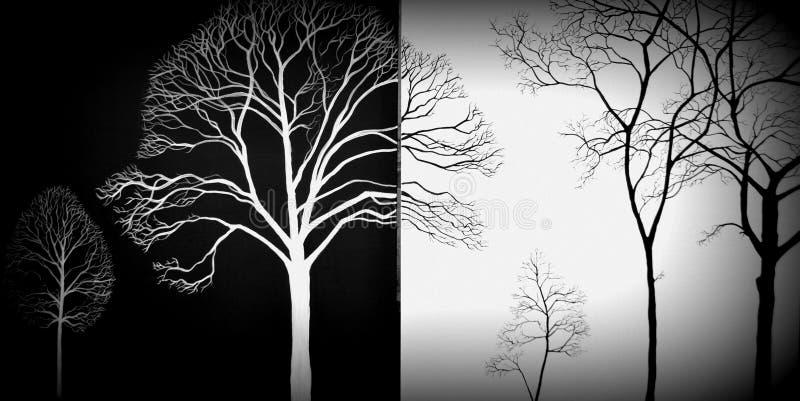 Rama de árbol en un fondo blanco y negro imagenes de archivo