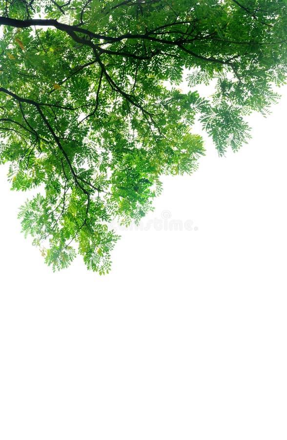Rama de árbol grande imagen de archivo libre de regalías