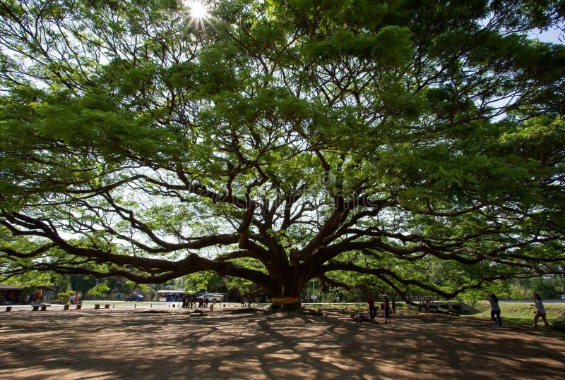 Rama de árbol grande con las hojas hermosas debajo del cielo imágenes de archivo libres de regalías