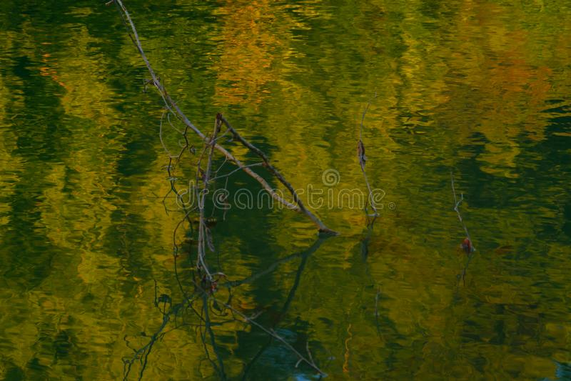 Rama de árbol de OOF en el lago con la reflexión del agua que se asemeja a la pintura al óleo imagen de archivo libre de regalías