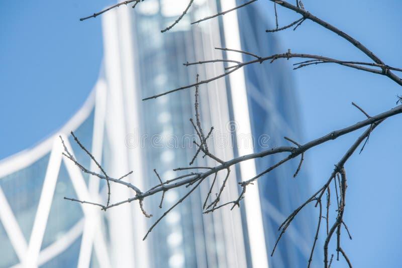 Rama de árbol secada en invierno con la torre de la ciudad en fondo imagen de archivo libre de regalías