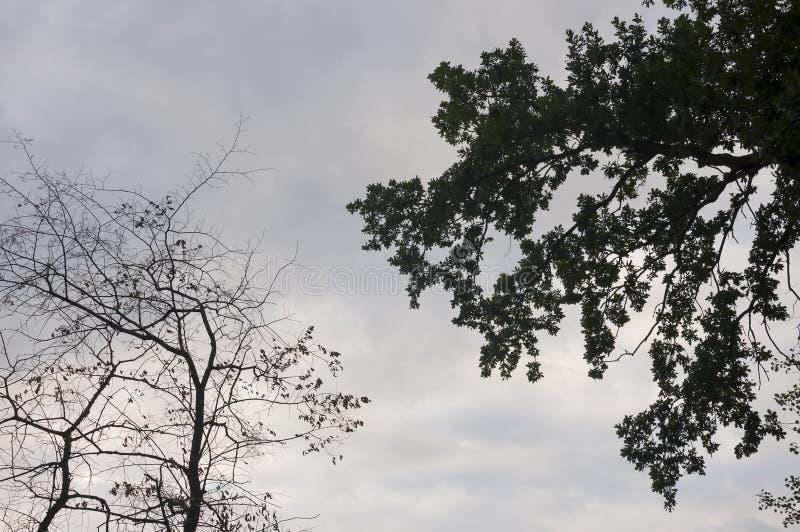 Rama de árboles con las hojas y fuera en el fondo con el cielo gris-azul Contrarios del contraste del verano imagen de archivo