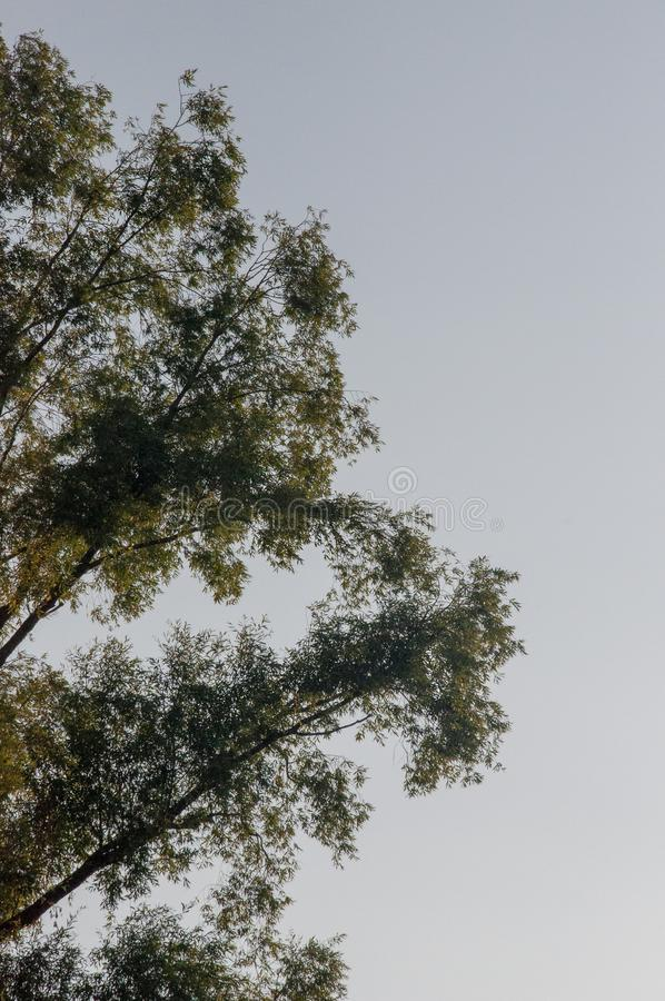 Rama de árboles con las hojas y fuera en el fondo con el cielo gris-azul Contrarios del contraste del verano foto de archivo libre de regalías