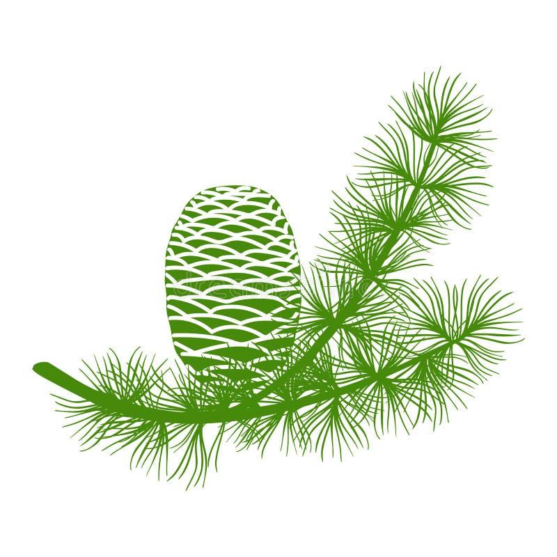 Rama de cedro esponjoso verde y dos conos Aislada en la ilustración vectorial plana Vectorial blanca fotografía de archivo libre de regalías