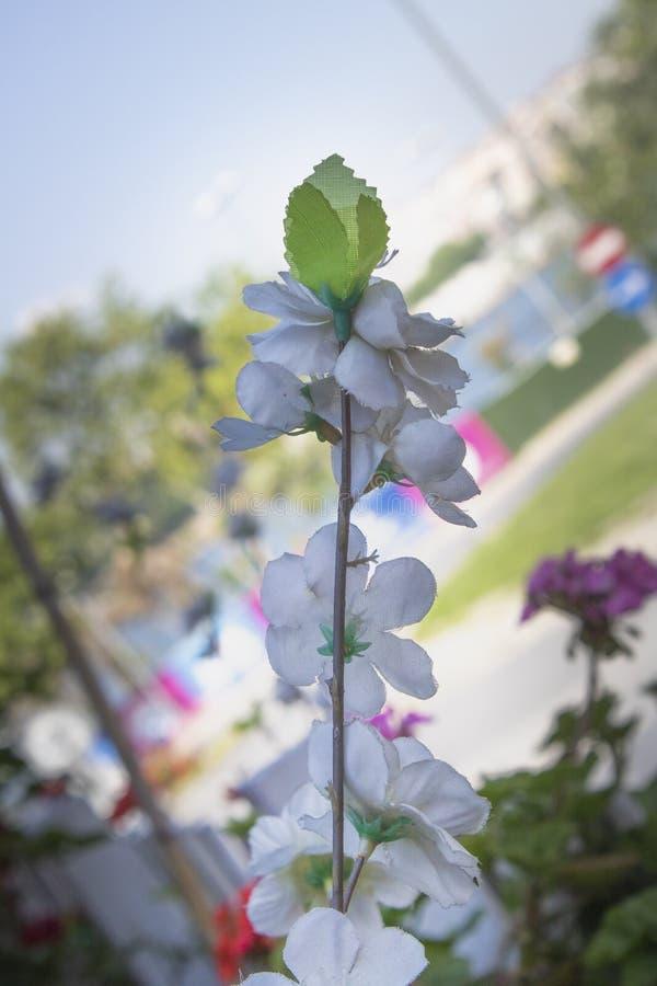 Rama de flores blancas artificiales imagen de archivo libre de regalías