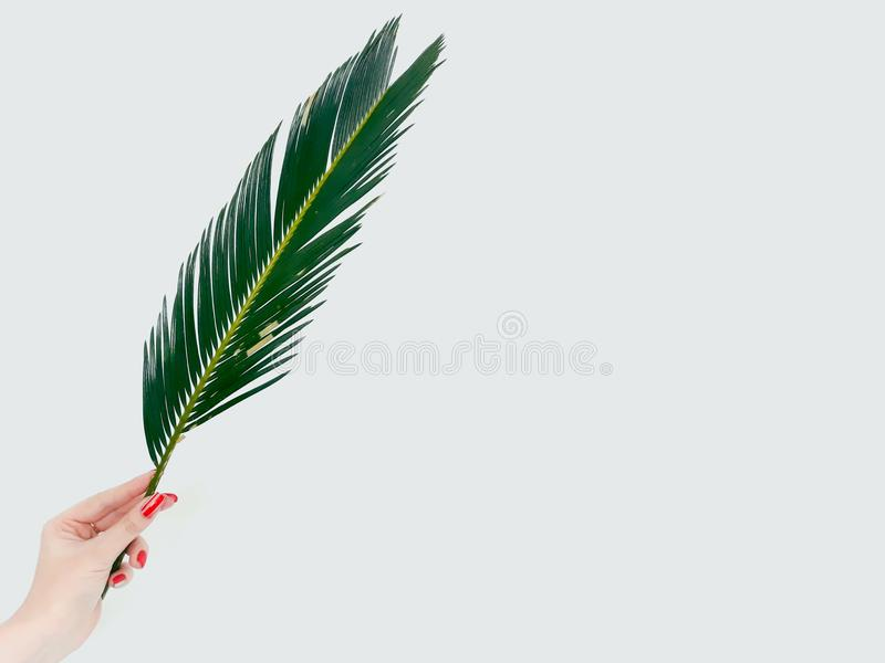 Rama de la botánica de la flora de la naturaleza de la planta de la decoración de la hoja del helecho fotografía de archivo libre de regalías