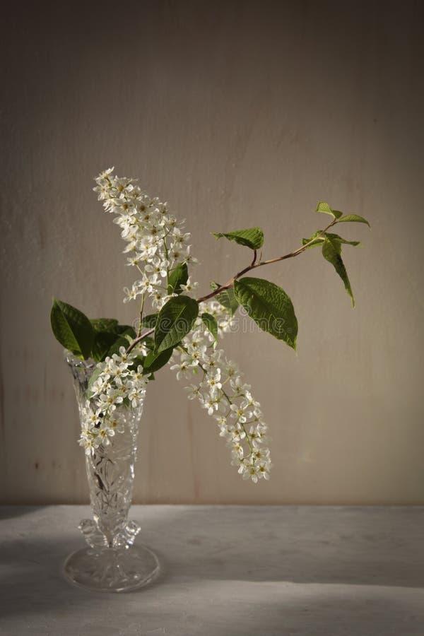 Rama de la cereza floreciente en la madrugada fotografía de archivo