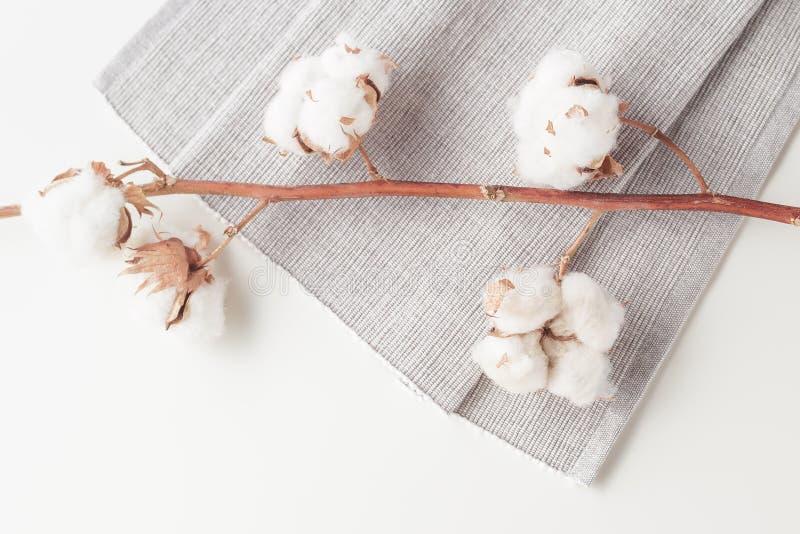 Rama de la flor de la planta de algodón en el fondo blanco imagen de archivo