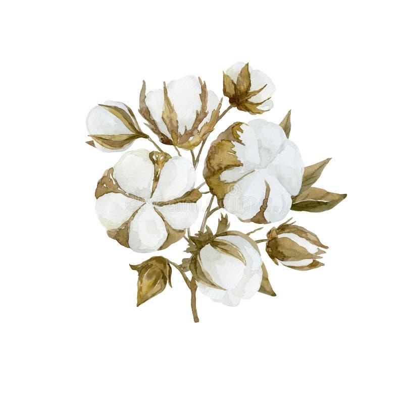 Rama de la flor del algodón de la acuarela Ramo floral foto de archivo libre de regalías