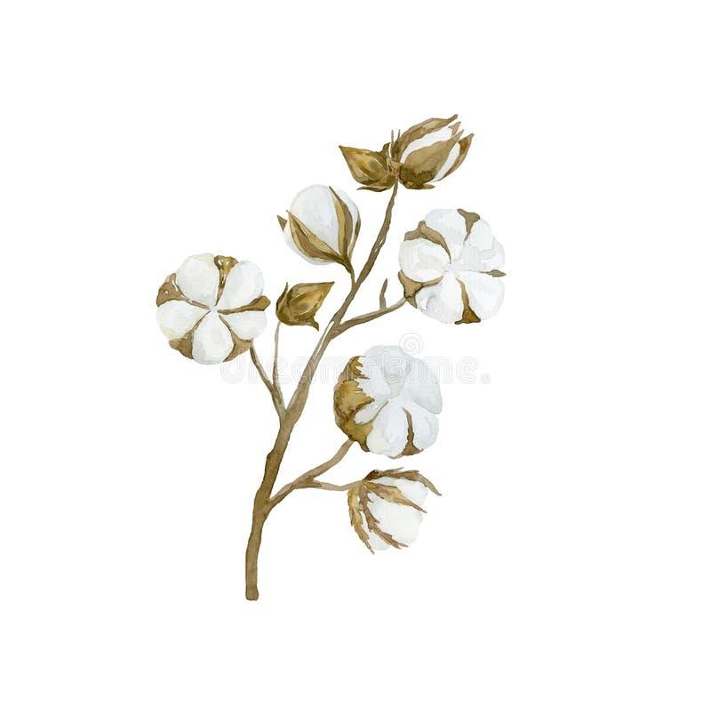 Rama de la flor del algod?n de la acuarela Ramo floral imagenes de archivo