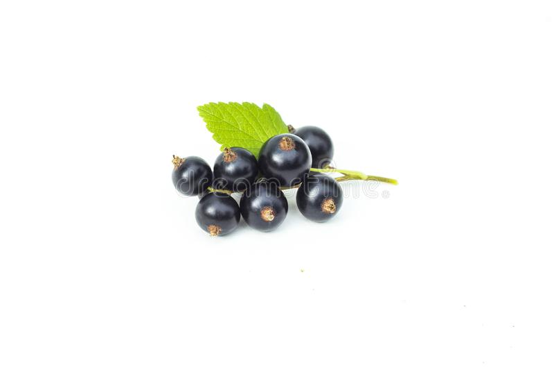 Rama de la grosella negra fresca con la hoja verde, bayas jugosas de la grosella negra, aisladas en el fondo blanco imágenes de archivo libres de regalías