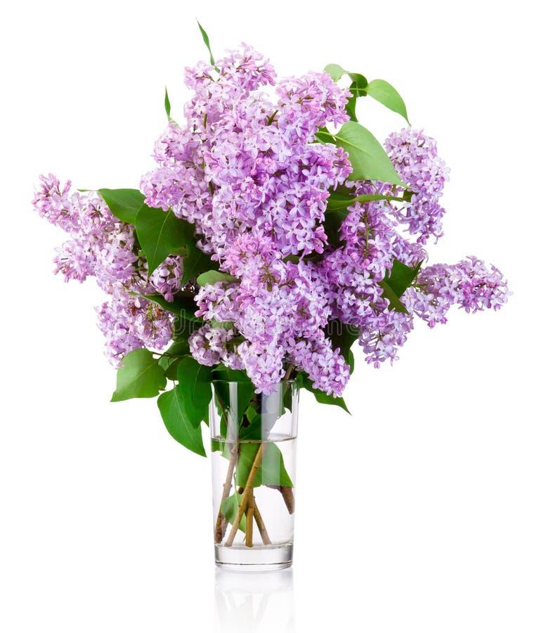 Rama de la lila en el florero de cristal aislado en el fondo blanco foto de archivo
