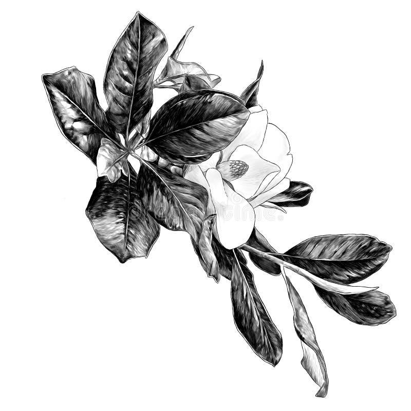 Rama de la magnolia con la flor y las hojas stock de ilustración