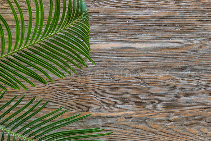 Rama de la palma en un viejo fondo de madera con el espacio de la copia imagenes de archivo