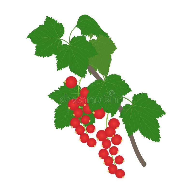 Rama de la pasa roja con las hojas ilustración del vector