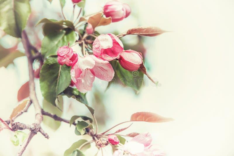Rama de la primavera con las pequeñas flores rosadas Copie el espacio Vintage teñido de cristal imagen de archivo