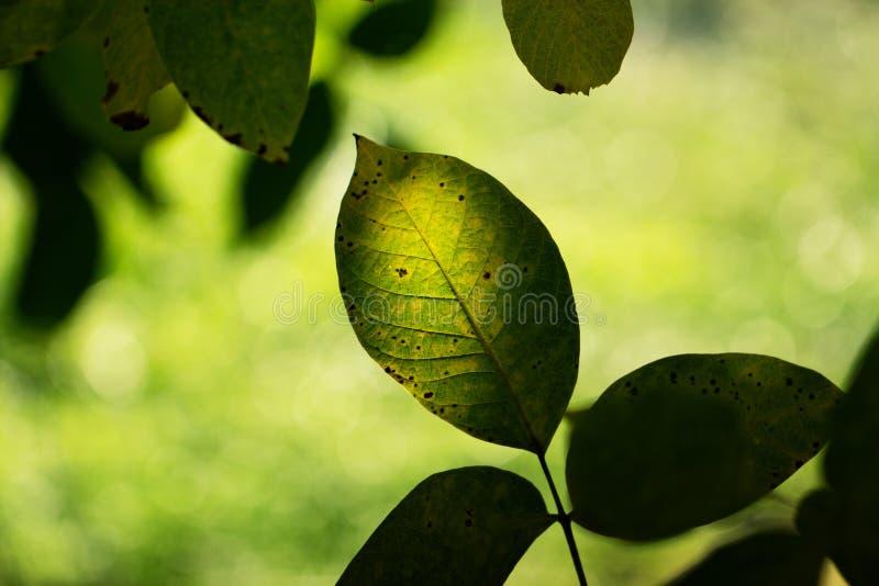 Rama de las hojas de otoño del color verde en un fondo de a para imagen de archivo libre de regalías