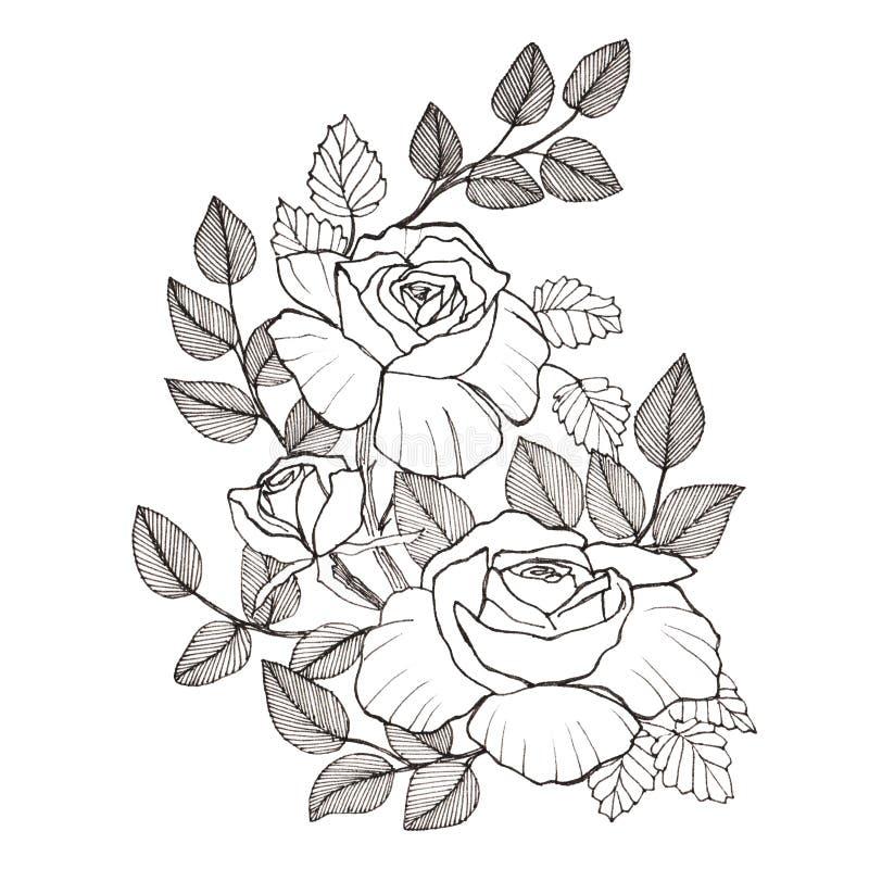 Rama de las rosas blancas stock de ilustración