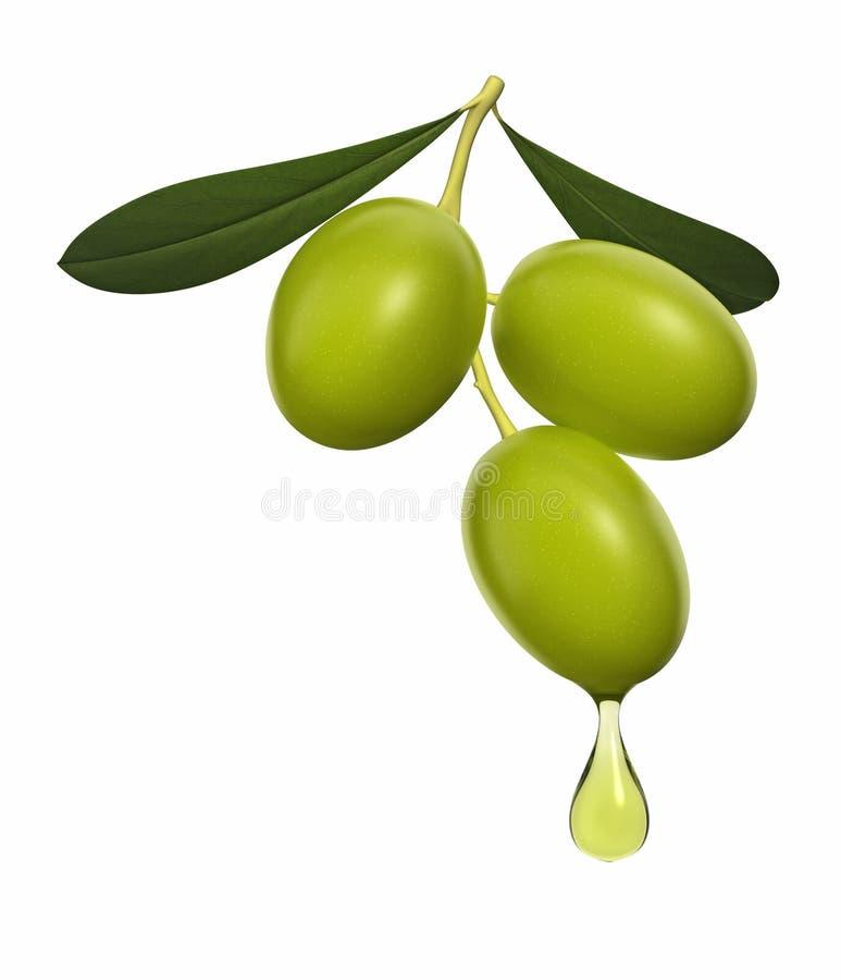 Download Rama de olivo stock de ilustración. Ilustración de ramificación - 11890576