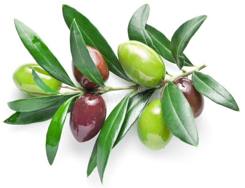 Rama de olivo con las bayas verdes olivas aisladas en el fondo blanco imagenes de archivo
