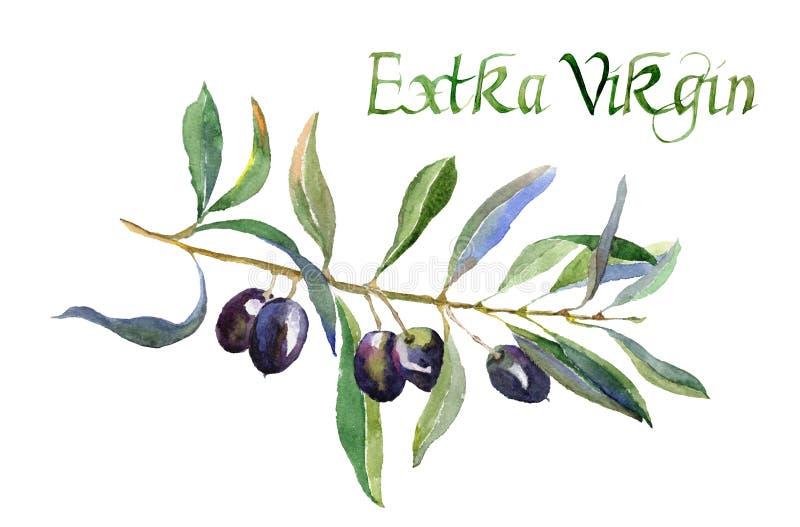 Rama de olivo con las hojas y la Virgen adicional de la inscripción aislada en el fondo blanco stock de ilustración