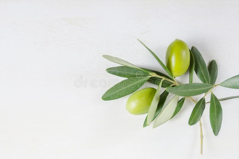 Rama de olivo en el fondo blanco con el espacio de la copia, endecha plana imagenes de archivo